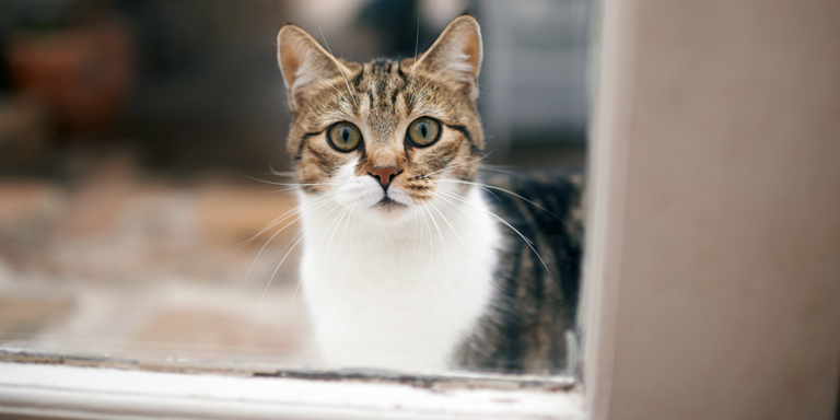 A young cat peeping through a window
