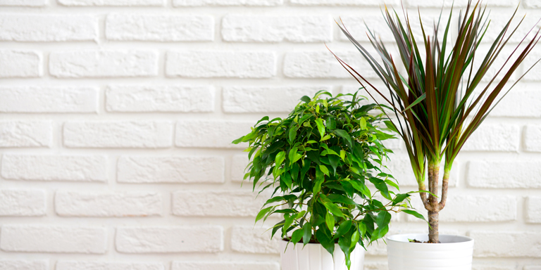 Two pots with indoor plants in front of a white brick wall